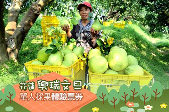 台灣休閒農業發展協會-單人採果體驗票券