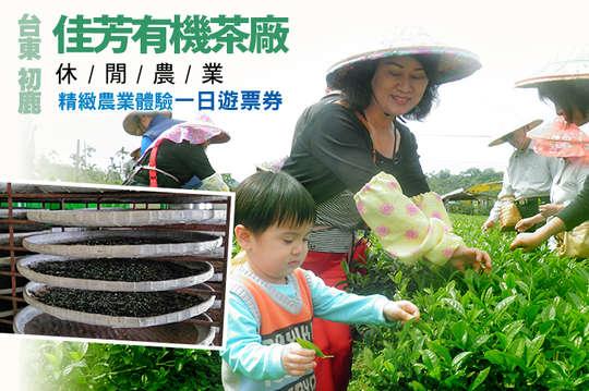 台東-初鹿休閒農業區(佳芳有機茶廠)