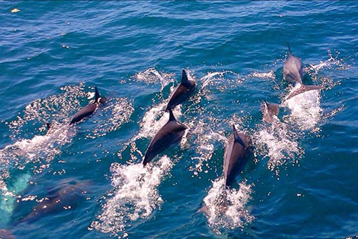 宜蘭-噶瑪蘭號(賞鯨)