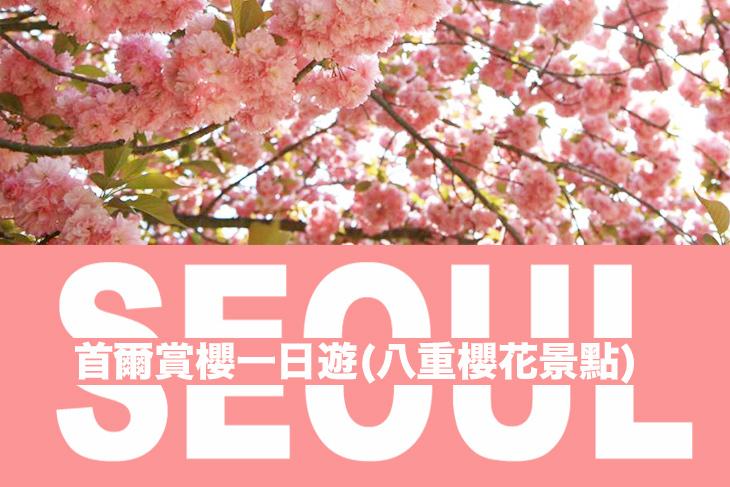 韓國-首爾賞櫻一日遊(八重櫻花景點)