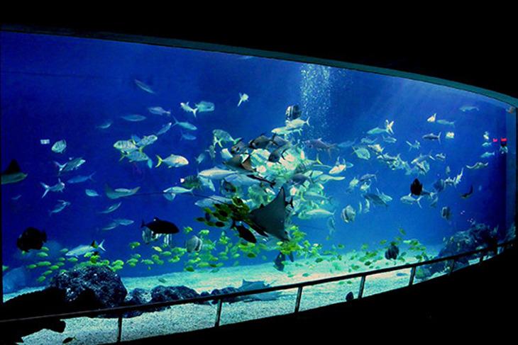 屏東-國立海洋生物博物館