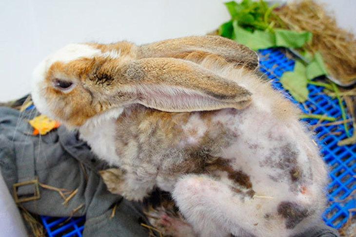 一起夢想-拯救兔兔大作戰
