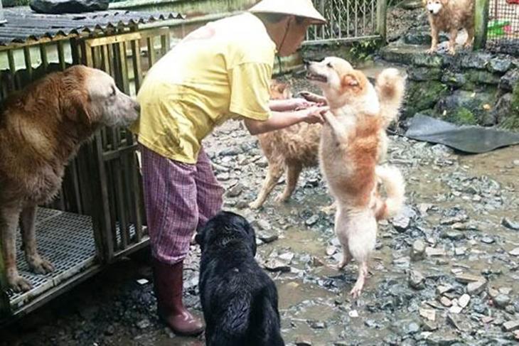 一起夢想-狗狗不餓援助專案
