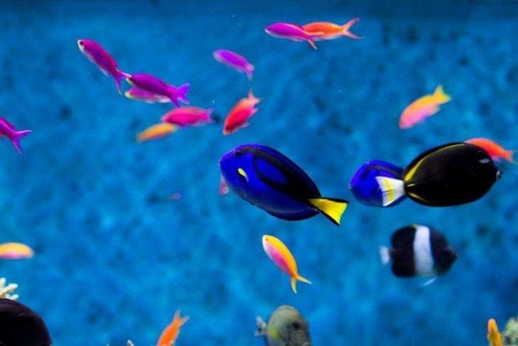 新加坡-聖淘沙名勝世界™S.E.A海洋館一日門票