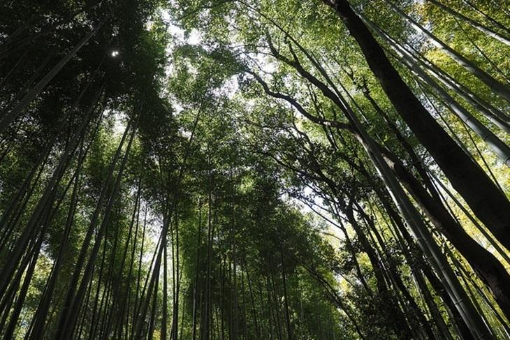 日本-嵐山電鐵/京都地下鐵一日券