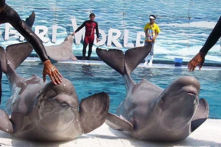 曼谷賽佛瑞野生動物園Safari World門票