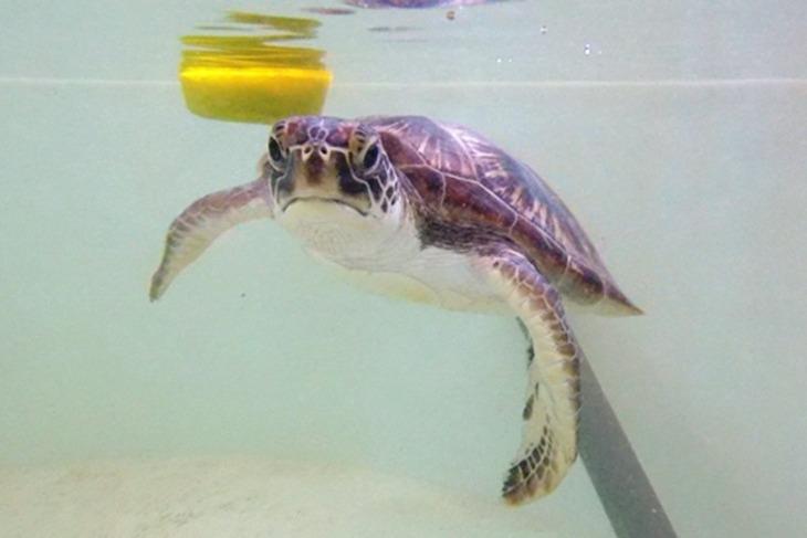 一起夢想-守護海龜,飛揚大海