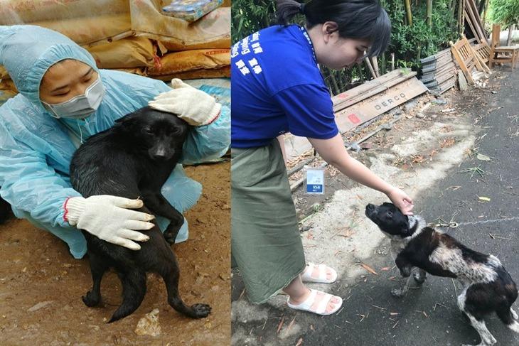 一起夢想–動物防虐案件調查