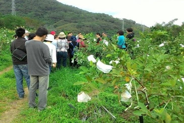 台東-月季優質農場