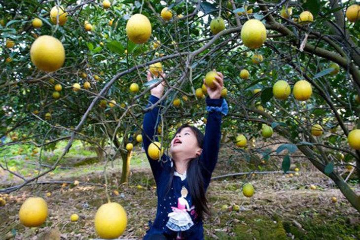 台南-仙湖休閒農場