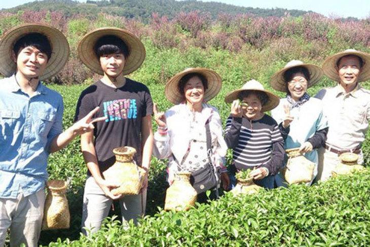 宜蘭-馨山茶園