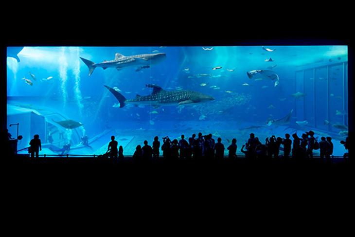 日本-沖繩美麗海水族館一日(實體票)