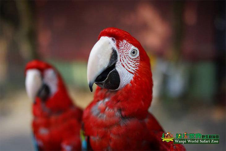 台南-頑皮世界動物園