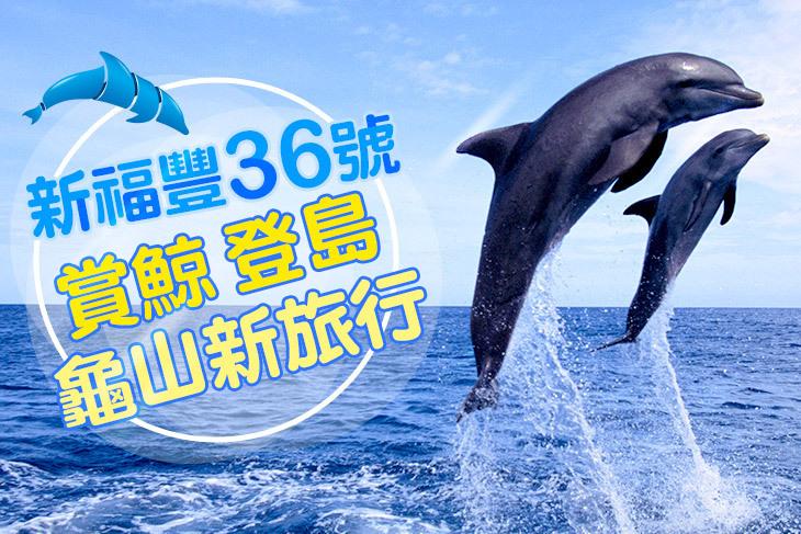 宜蘭-新福豐36號賞鯨旅遊
