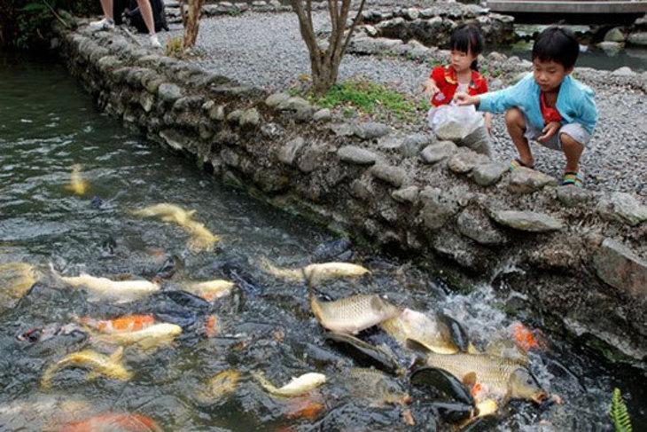 宜蘭-八甲休閒魚場