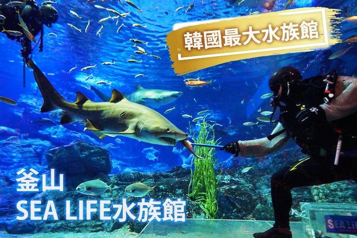釜山-SEA LIFE水族館