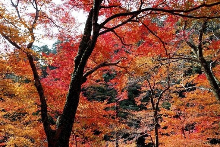 日本-東京一日遊(東照宮、中襌寺湖、華嚴瀑布、日光溫泉)