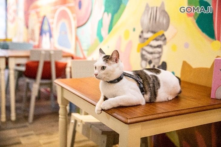 貓小路cafe - 2號店