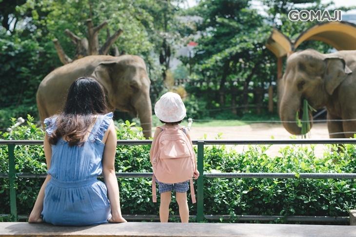 新竹動物園門票